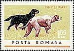 English-Setter-Pointer-Canis-liupus-familiaris.jpg