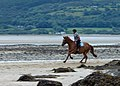 Equestrian exercise, Red Wharf Bay - geograph.org.uk - 1406852.jpg