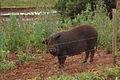Estrada S Berto - Manduri 040709 REFON 4.JPG