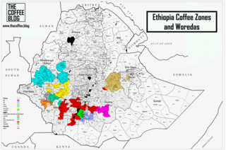 Coffee production in Ethiopia Aspect of agriculture