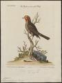 Euspiza americana - 1700-1880 - Print - Iconographia Zoologica - Special Collections University of Amsterdam - UBA01 IZ16100203.tif