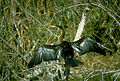Everglades National Park EVER1543.jpg