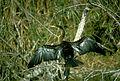 Everglades National Park EVER1543.jpg
