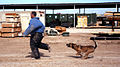 Every Dog Has His Day, Military Working Dogs Keeping Troops Safe DVIDS38772.jpg