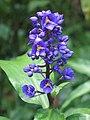 Exotic blue flower (i think).jpg