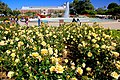 Exposition Park Rose Garden, Exposition Blvd. at Vermont Ave. University Park 14.jpg