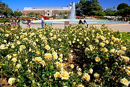 Exposition Park Rose Garden, Exposition Blvd. at Vermont Ave. University Park 14