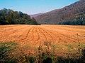 Farby jesene ^ Colors of autumn - panoramio.jpg
