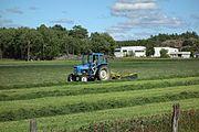 Farmer gathering grass for silage.jpg