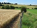Farmland, Salisbury - geograph.org.uk - 519793.jpg