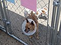 Fence Factory Agoura Pet Adoptions - panoramio.jpg