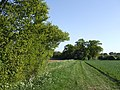 Field edge and copse - geograph.org.uk - 421227.jpg