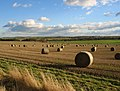 Field of round straw bales - geograph.org.uk - 120044.jpg