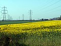 Fields Farm and Pylons - geograph.org.uk - 402550.jpg