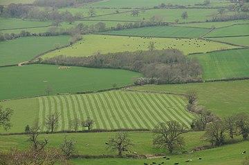 360px-Fields_below_Frocester_Hill_(1565)