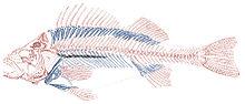 عظم السمكة إذا علق في البلعوم