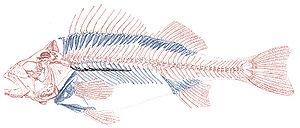 Fischskelett-Gräten.jpg