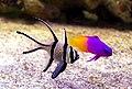 Fish (4125180174).jpg