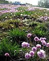 Flickr - Per Ola Wiberg ~ mostly away - flowers by the road.jpg