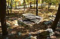 Floating Rock at Picnic Area - panoramio.jpg