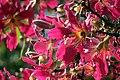 Flor de Paineira.jpg