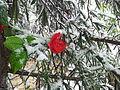 Flora of Israel Neve Daniel, Israel (13442712703).jpg