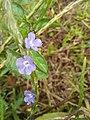 Flower1238.jpg