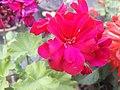 Flower20180527 184846.jpg
