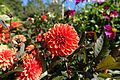 Flower @ Parc Floral @ Paris (30157227255).jpg