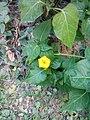 Flower in the Garden 2.jpg