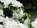Flower photograph (518436444).jpg