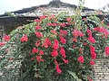 Flowers102.jpg