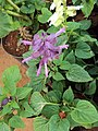 Flowers - Uncategorised Garden plants 233.JPG