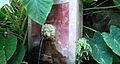 Fontana giardino Della minerva.jpg