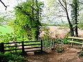 Footpath entrance to Merrivale Wood - geograph.org.uk - 1268564.jpg