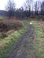 Footpath to Rawtenstall - geograph.org.uk - 1080017.jpg