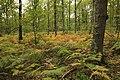 Forêt Départementale de Méridon à Chevreuse le 29 septembre 2017 - 42.jpg