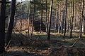 Forstwirtschaft im Forst Rundshorn IMG 3353.jpg