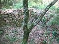 Fossa de la Torre de Vilarmau.jpg