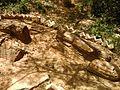 Fossil woods 3.jpg