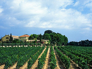 Spanish wine - Traditional vineyards are common sights at countryside.