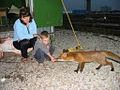 Fox and boy.JPG