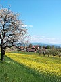 Frühlingslandschft Aaretal Schweiz-1.jpg