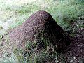 Freiländer Alm Ameisenhaufen 2016.jpg
