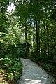 Fußweg Felsengarten Sanspareil 04082019 041.jpg