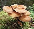 Fungi in Muuratsalo.jpg