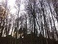 G. Khimki, Moskovskaya oblast', Russia - panoramio (2).jpg