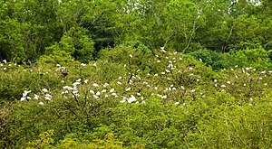 Gudavi Bird Sanctuary - Birds on the trees at Gudavi lake