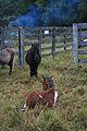 GH GH Pony Auction (12181743405).jpg