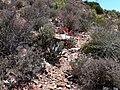 Gamkaberg Nature Reserve, South Africa (1020287).jpg